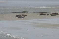 SDC10381-zeehonden